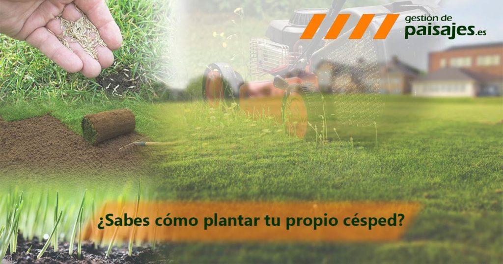 Cómo plantar césped